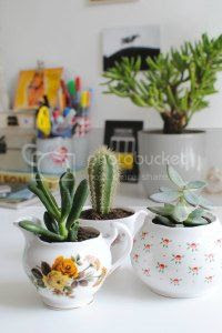 diy tea cup planters, burkatron, craft, uk, blogger