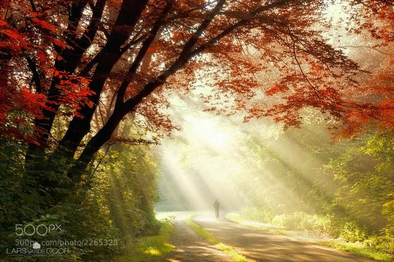 Photograph Shower of Light by Lars van de Goor on 500px