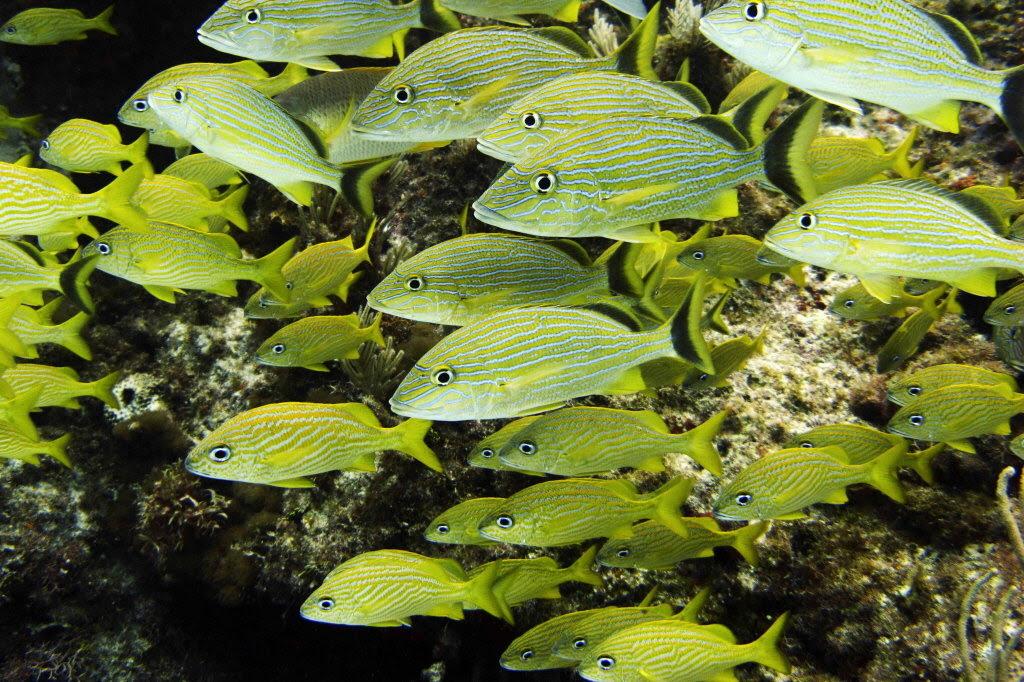 amisbide: ocean food chain for kids