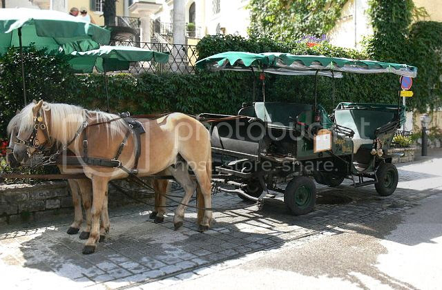 Haflingers pulling a carriage in Austria