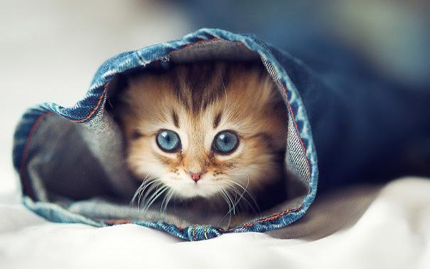 Cat Cute Cat Pics For Whatsapp Dp