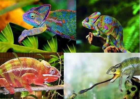 Kwento of Chameleon Colors