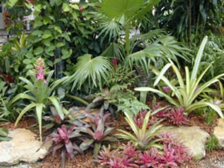 Tropical Landscaping Plants