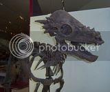 bone headed dino @ ROM