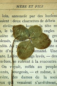 four leaf clover pressed                   in book