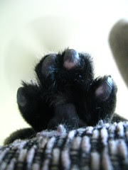 Maggie's paw