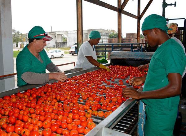 0516-tomate.jpg