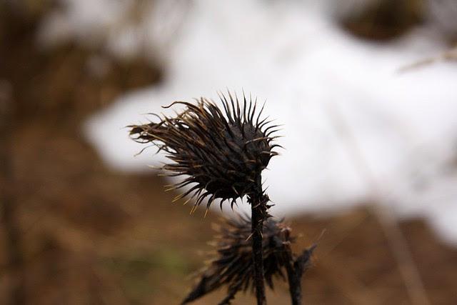 Winter, Powell Butte