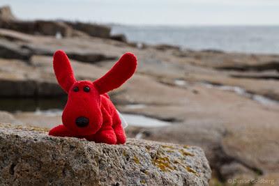 on the rocky coastline of downeast Maine