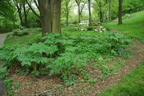 Shade gardens, Osborne Garden