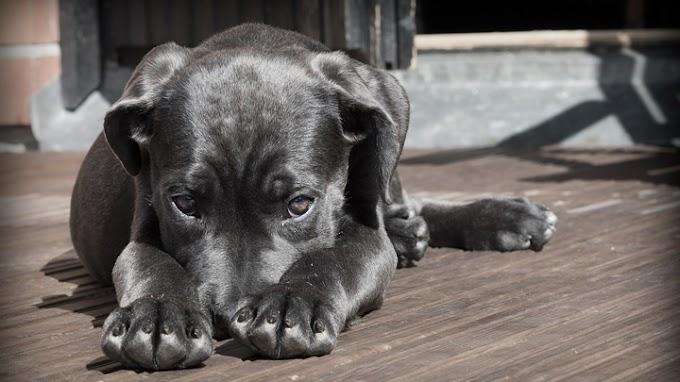 Consejos para que el perro supere su miedo a otros perros