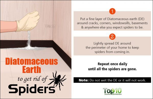 Diatomaceous Earth to get rid of spiders