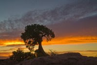 Dead Horse Point Sunrise - Tree