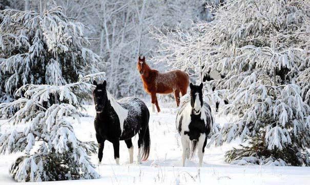 Χειμώνας (8)