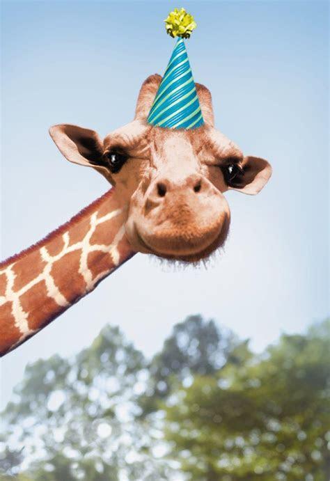 Betting Giraffe Funny Birthday Card   Greeting Cards