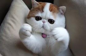 Kucing Kucing Bagus