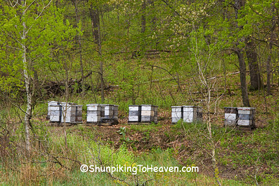 Bee Hives in the Spring, Sauk County, Wisconsin
