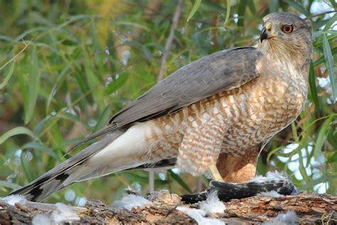 What Do Birds Eat?   Bird Eating Habits & Diets