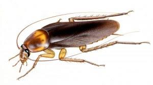 cockroach-brains-antibiotic_25777_600x450
