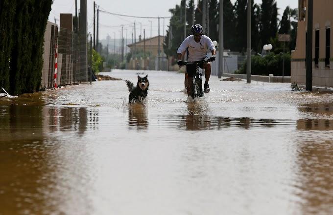 Las protectoras de animales de las zonas devastadas por la DANA necesitan ayuda