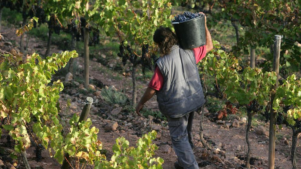 Los viñedos de producción ecológica ayudan a mantener la biodiversidad