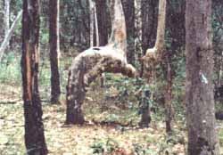 pokok rukuk