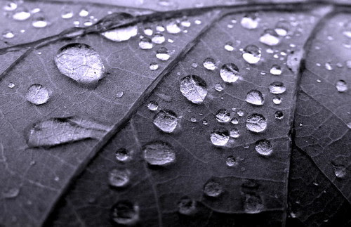 Raindrops on a Leaf by 1963chris