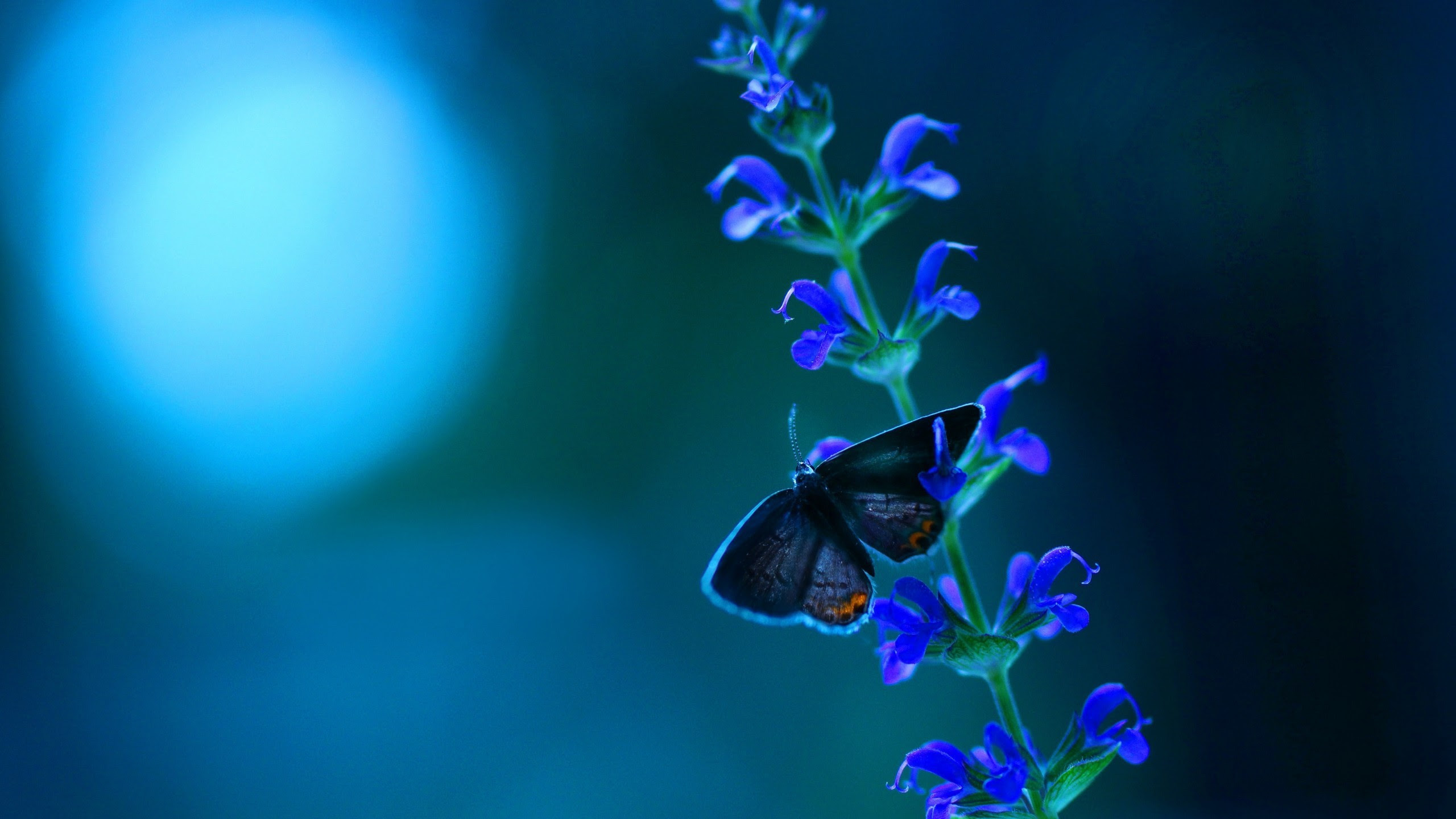 Little butterfly on blue flowers brush wallpapers and ...
