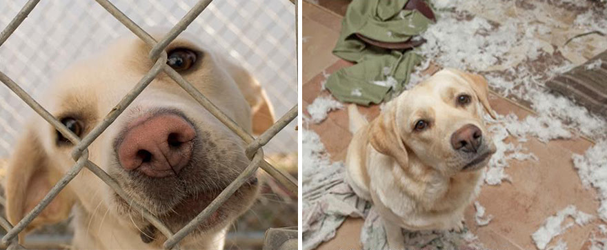 mascotas-adoptadas-antes-despues (6)