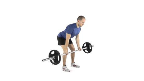 barbell bent  row supination grip youtube