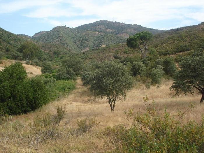 Foto de  Subida al Cerro Torre Árboles a través del Arroyo de los Pedroches