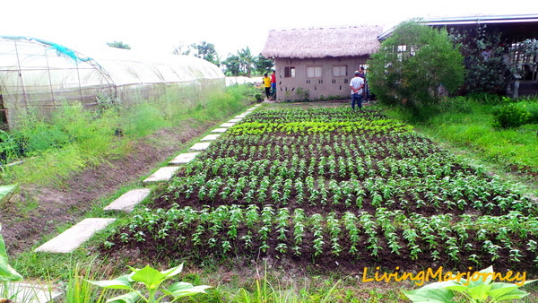 Fresh Start Organic Farm Silay City