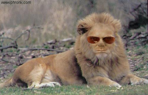 Kiefer Lion