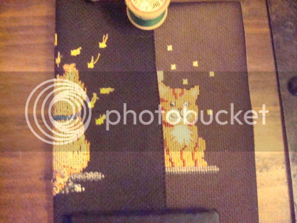 DSC03588Catsonblack_zps7e25651a.jpg Cats on Black