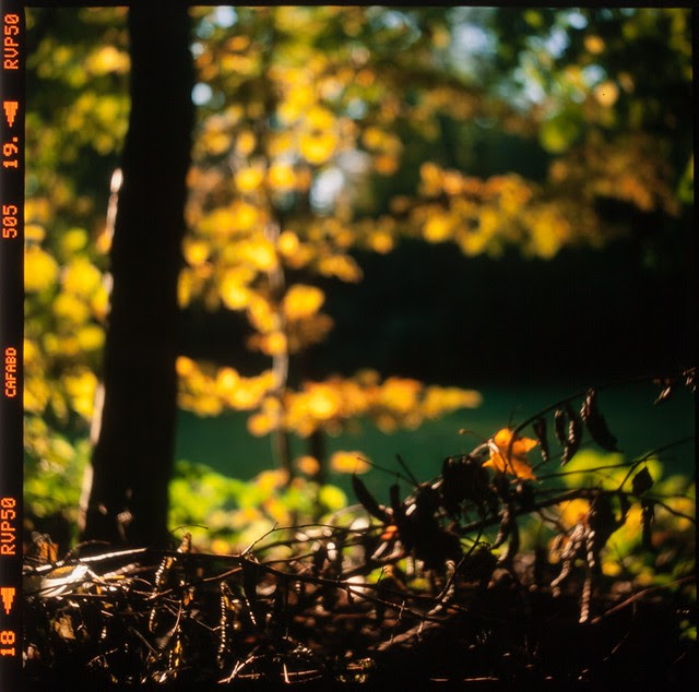 autumn silhouettes [lights and shadows] (+1)
