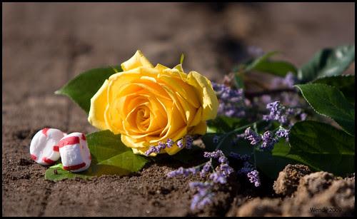 goodbye rose