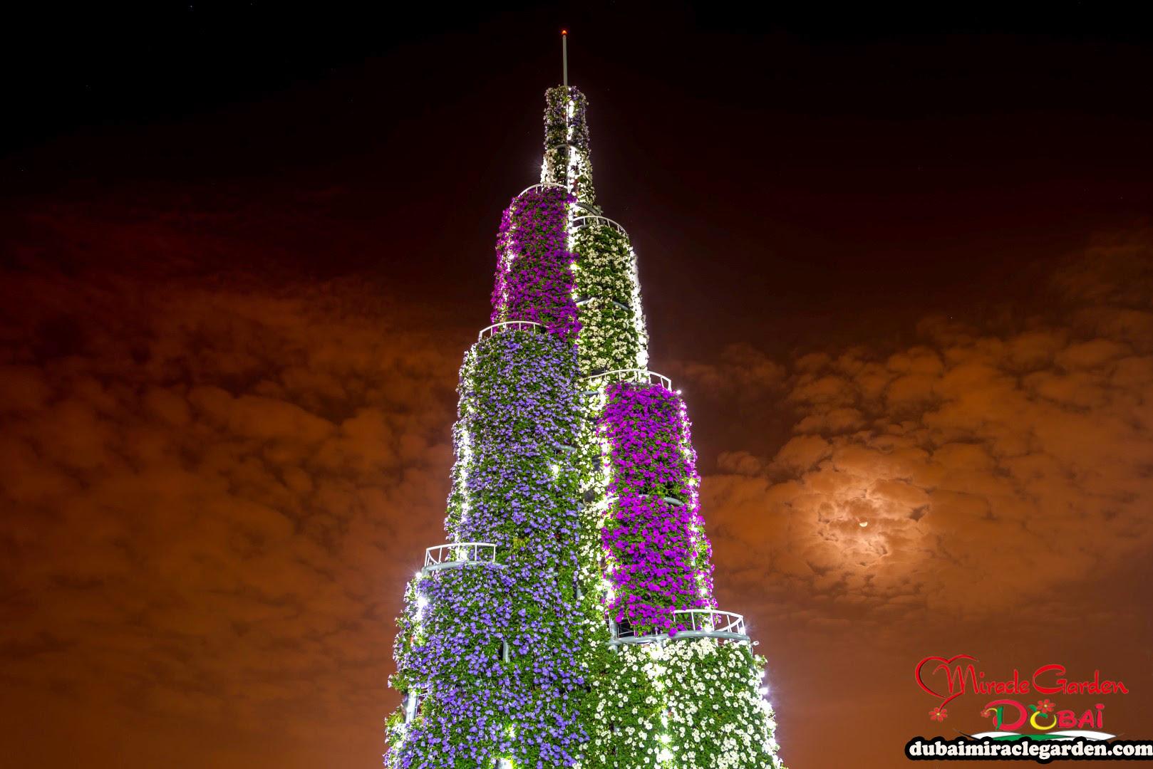 Dubai Miracle Garden 01