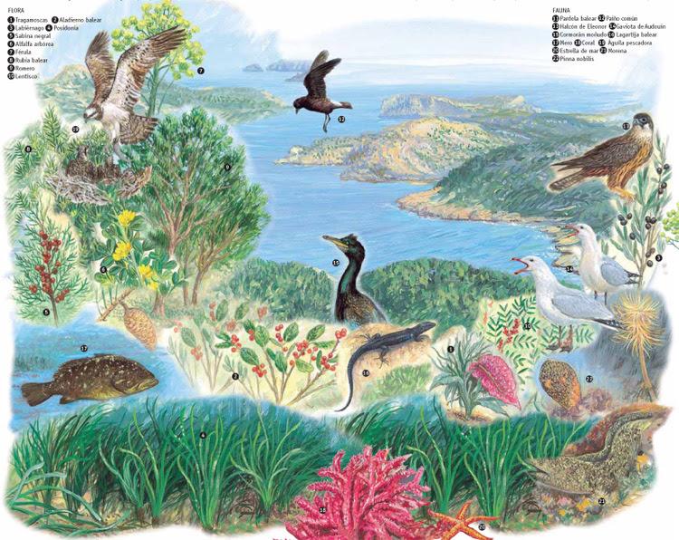 Resultado de imagen de islas balears, vegetació