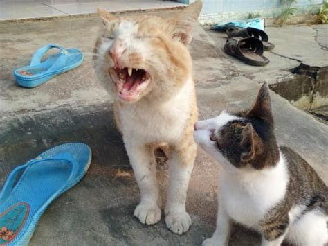 anira  kucing lovely