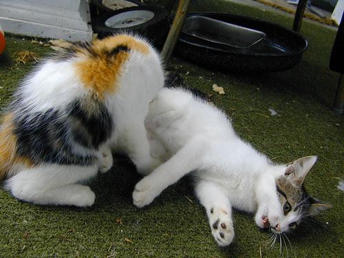 Kitty Pr0n