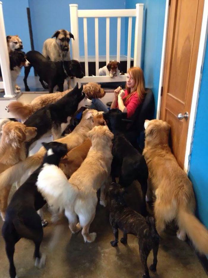 C'est ce qui se passe lorsque vous essayez de manger du bœuf séché dans une garderie de chien
