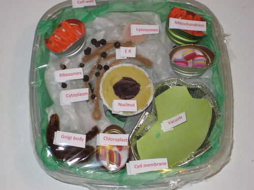 T's plant cell