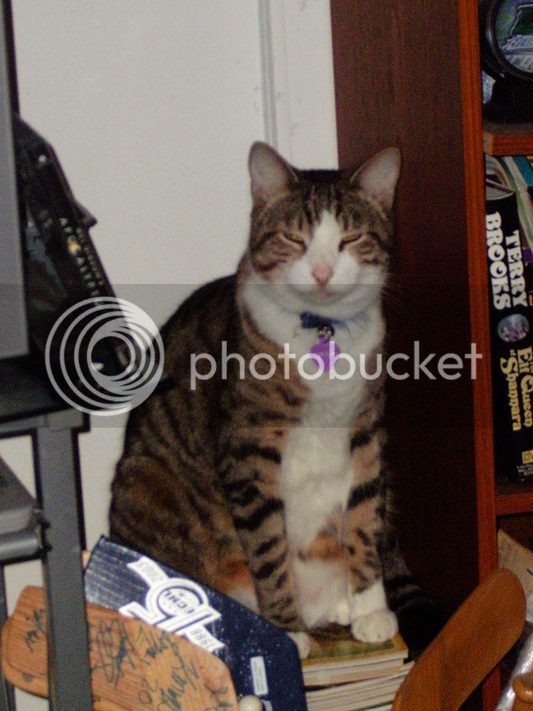 Sir Tristan Tabby Cat Longtail