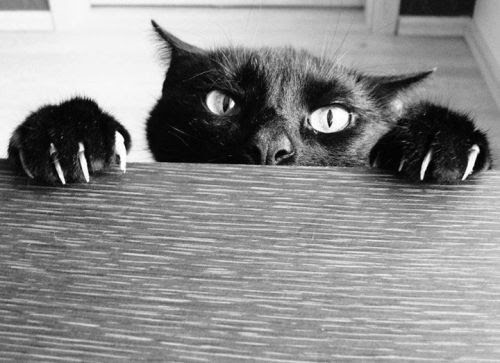 I'm keeping an eye on you. Have you read The Dead Game yet? If not, I know where you live.