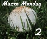 http://macromonday2.blogspot.fi/2014/03/remembrance-stone.html
