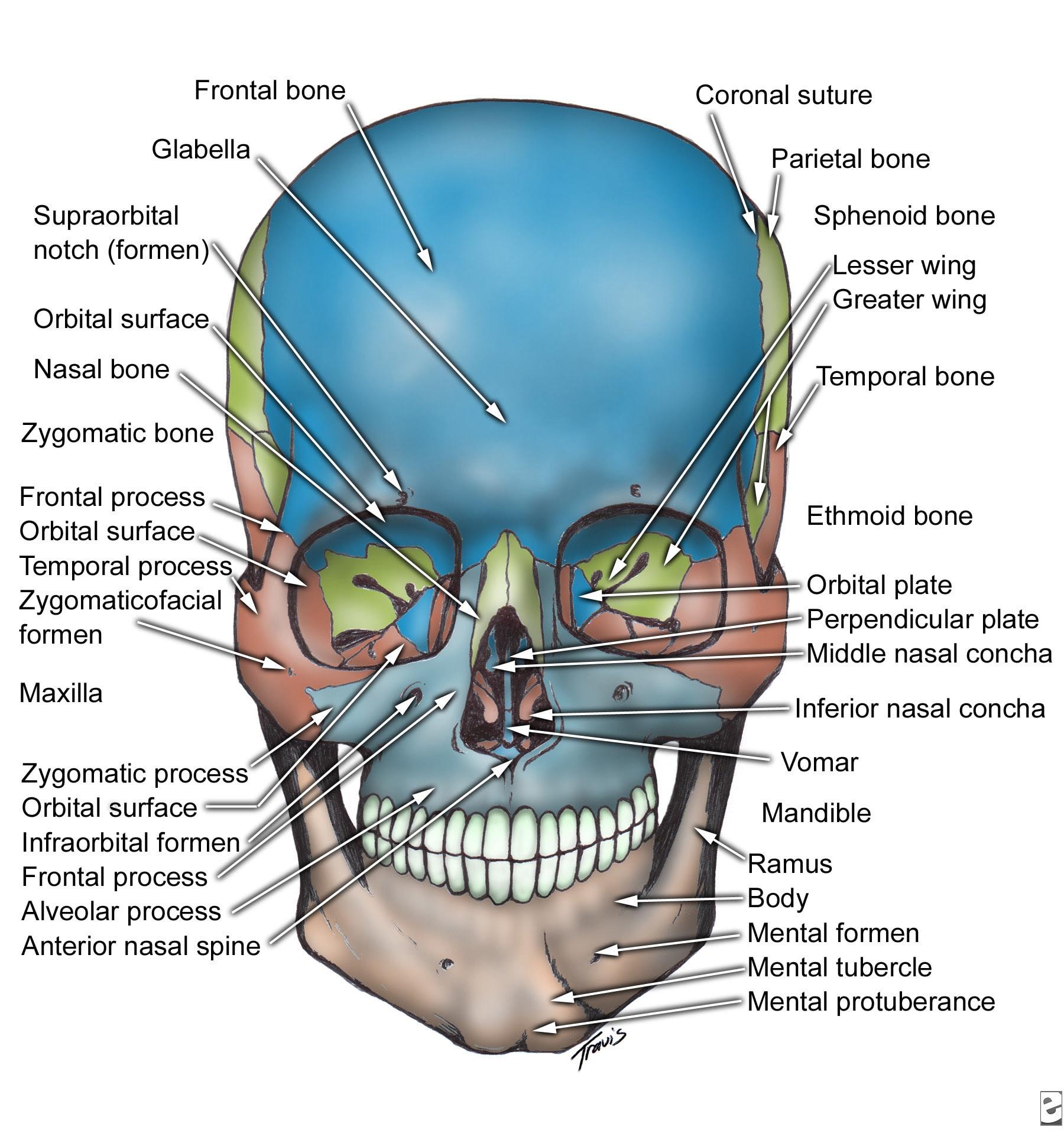 Oral  U0026 Maxillo