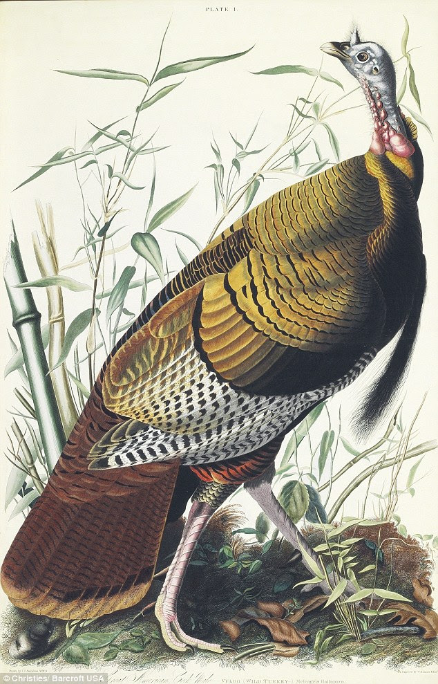 Creation: The life-size prints were made from engraved copper plates based on Audubon's original watercolors, painted for both art and scientific study