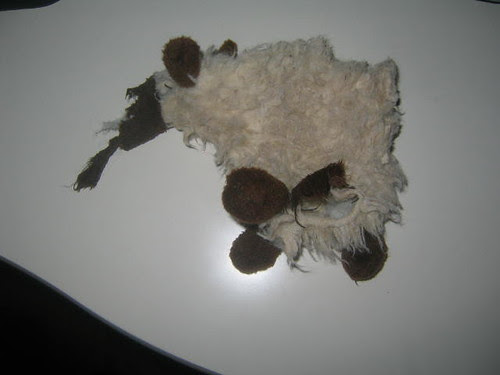 he was a good little sheep...