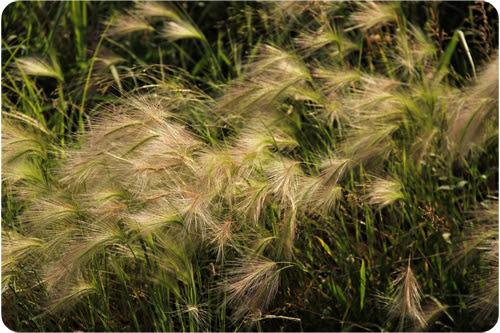 fuzzy grasses web.jpg