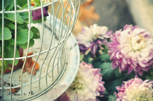 I love birdcages.